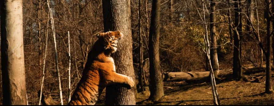 New York Wild Side – Short Film (USA)